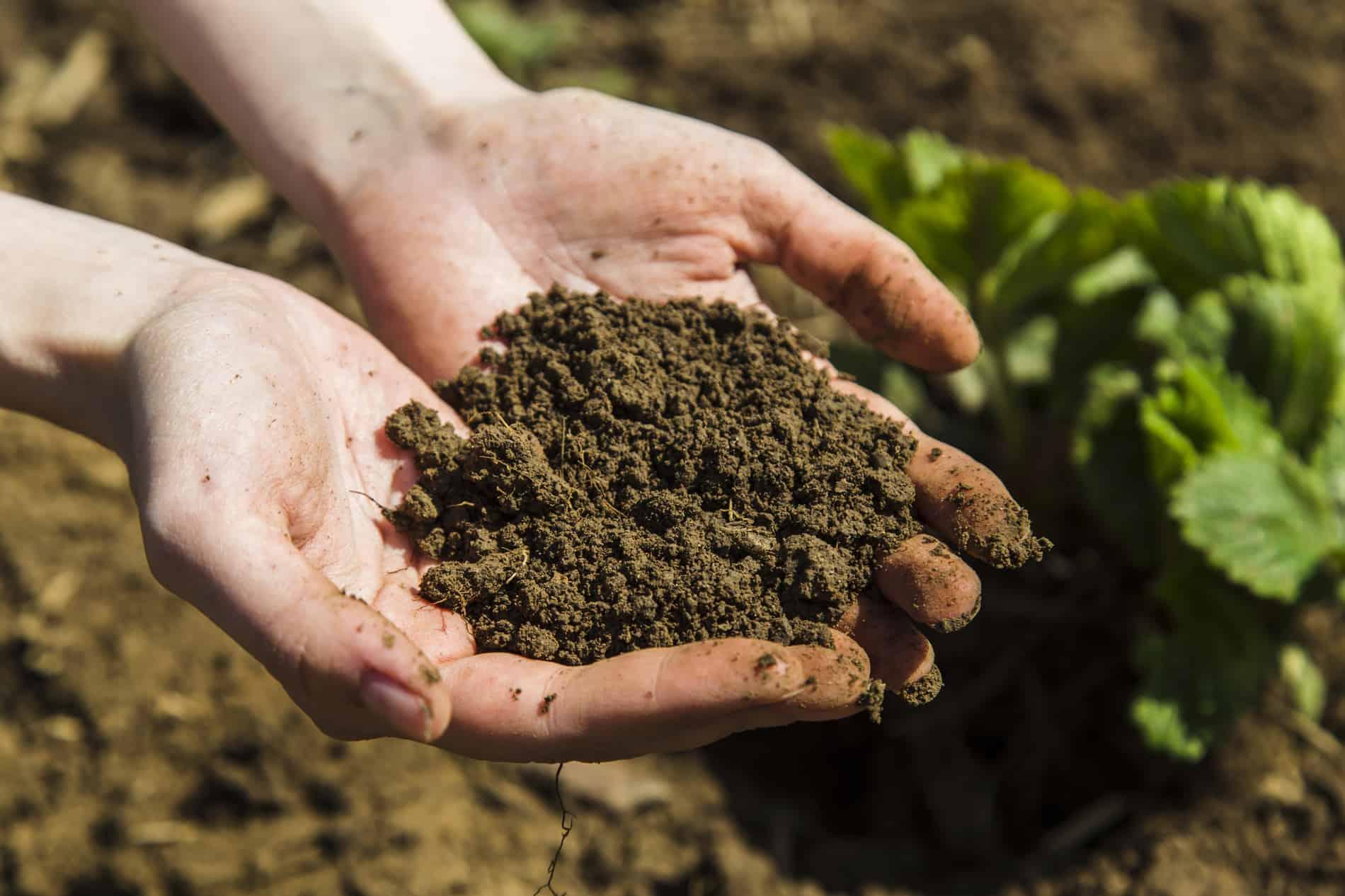 Kompostierte Erde