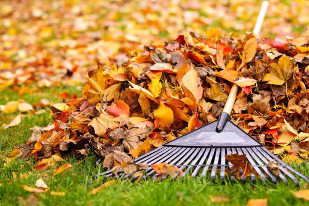 Herbstblätter mit Harke