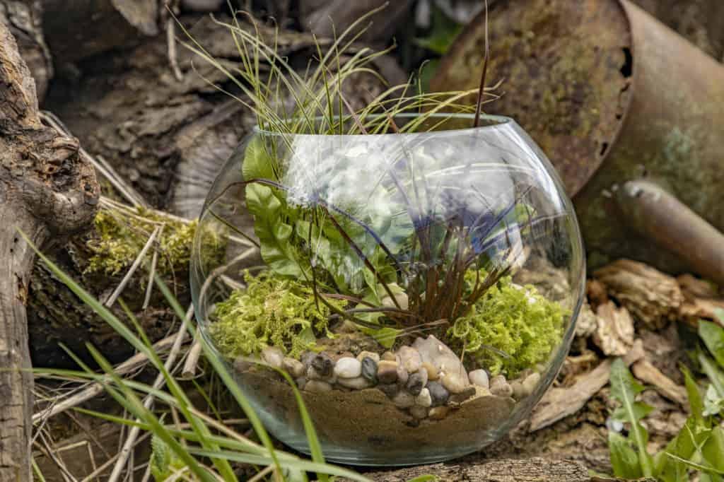 Mini Gewächshaus im Glas