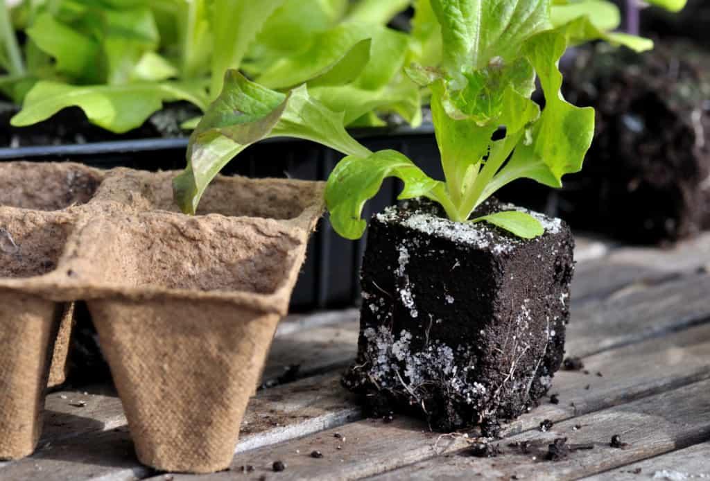 Mini Gewächshaus mit Jungpflanzen