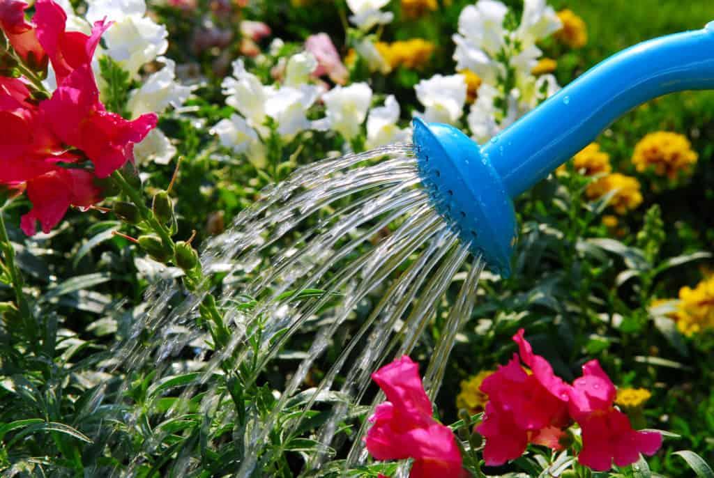 Bewässerung mit Gießkanne
