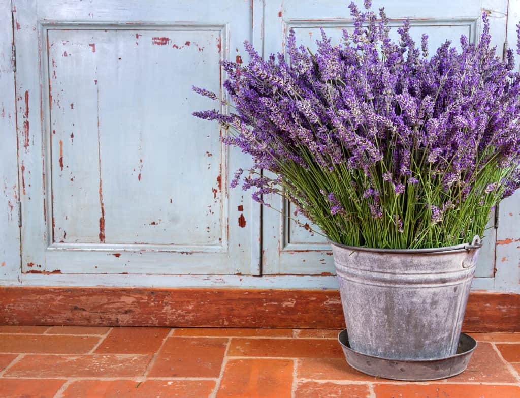 Lavendelsträußchen in rustikaler Umgebung